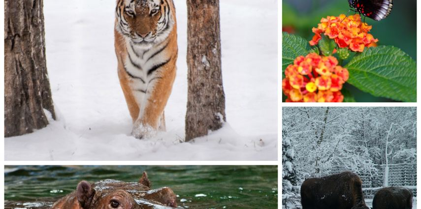 What to do at the zoo?Here are the top 10 things to do in bad weather!