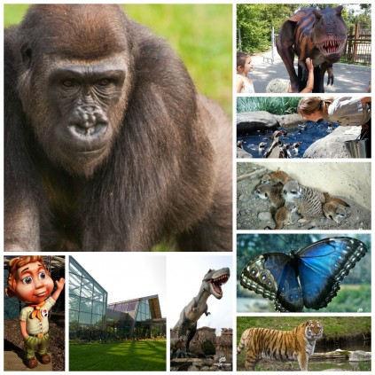 What to do at the zoo...on a long weekend.