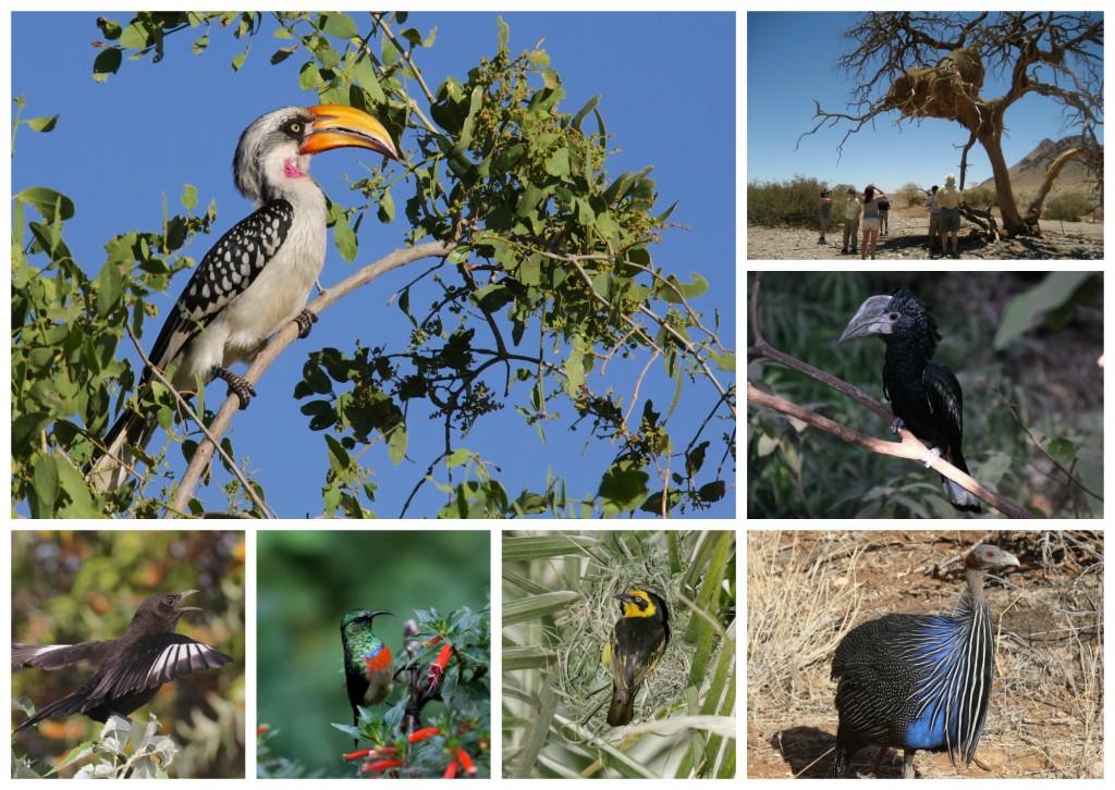 Zoofari-BirdNerdsCollage