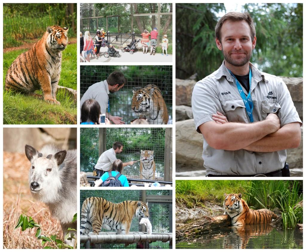 ZookeeperWeekRyanCollage