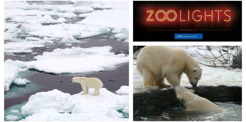 ZOOLIGHTS this year features a brand new interactive light display that showcases the polar bear to talk about climate change.