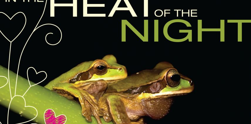 In the Heat of the Night is a yearly Valentine's day event at the zoo that  unleashes your inner animal.