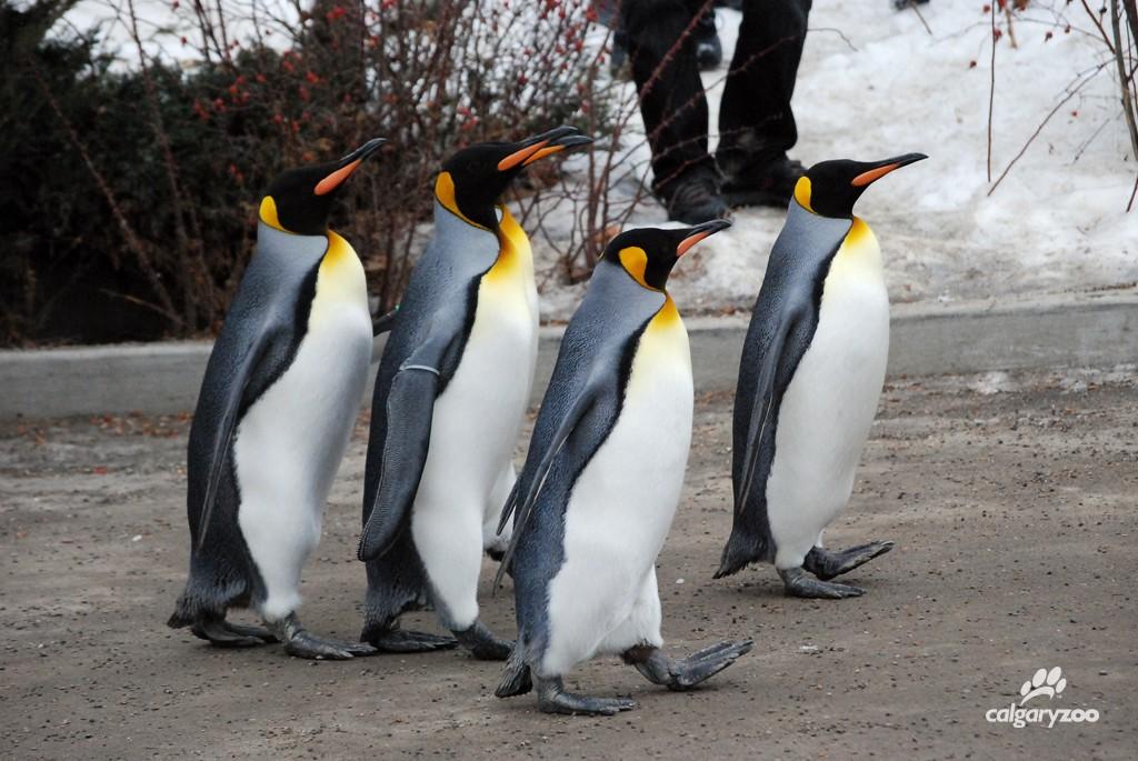 Penguin Walk 2 2015