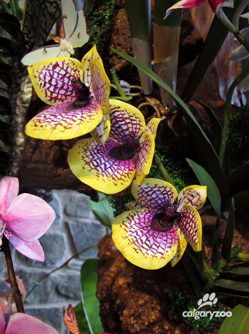 Dale Cote's incredible sculpted orchids look realistic, even close up.