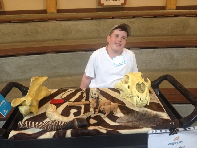 Adam Fisher, 13, working at one of the Calgary Zoo touch tables during Zoo Academy Camp.