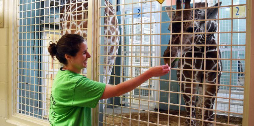 Walking In a Zookeeper's Footsteps