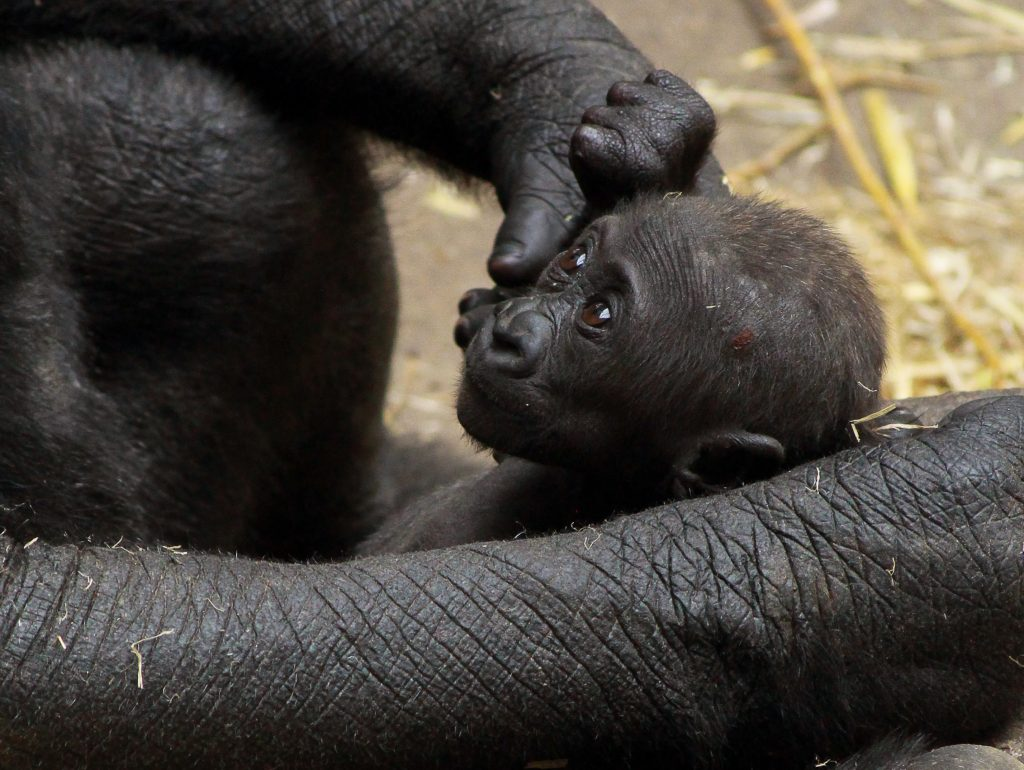 Little Kimani is starting to become more active, and actively grabbing on to her mom and her