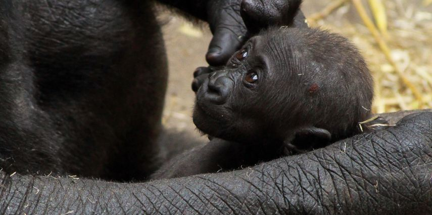 Little Kimani is starting to become more active, and actively grabbing on to her mom and her aunts.
