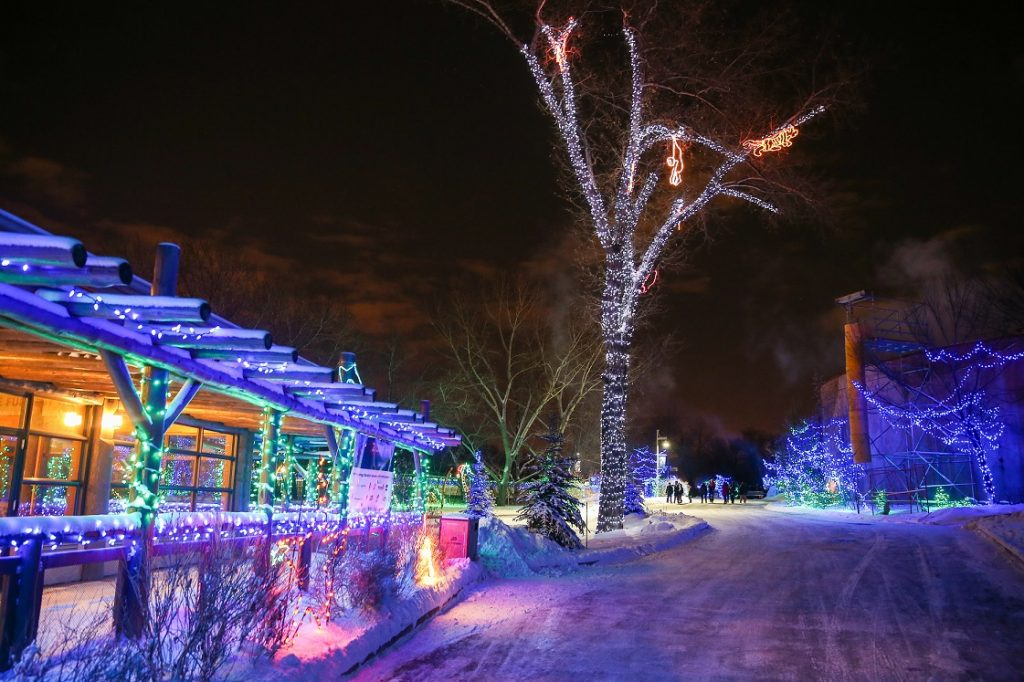 ZOOLIGHTS ready for the holidays! Photo credit: Sergei Belski