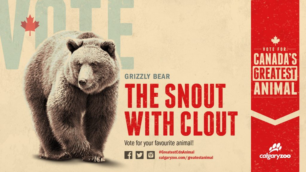 Will you vote for the snout with clout?