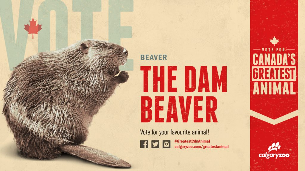 Are you voting for the dam beaver?