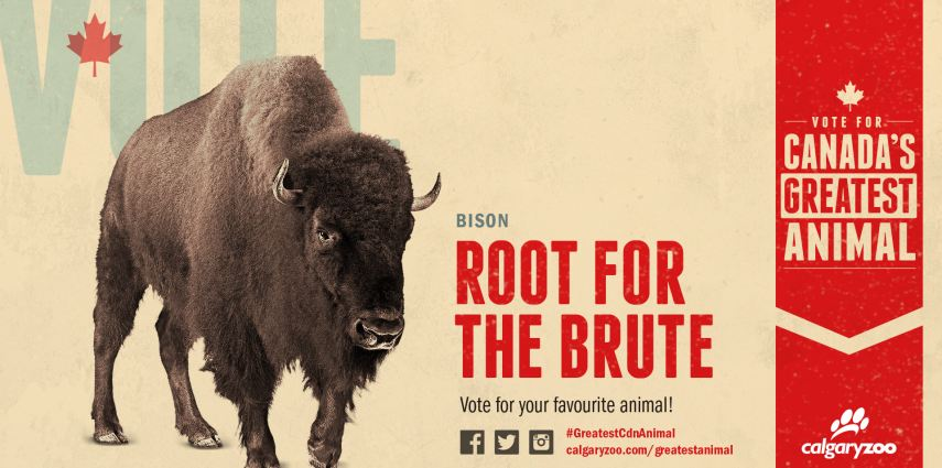 Will you root for the brute?