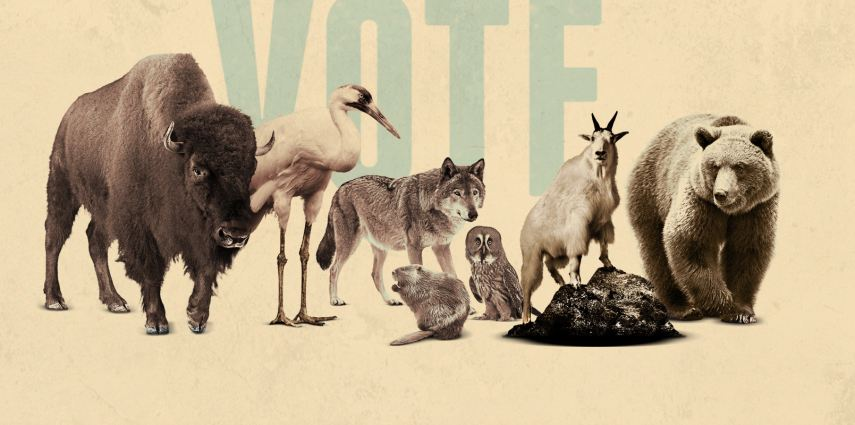 Meet the 'eh team'! Who will you vote for to be Canada's Greatest Animal?