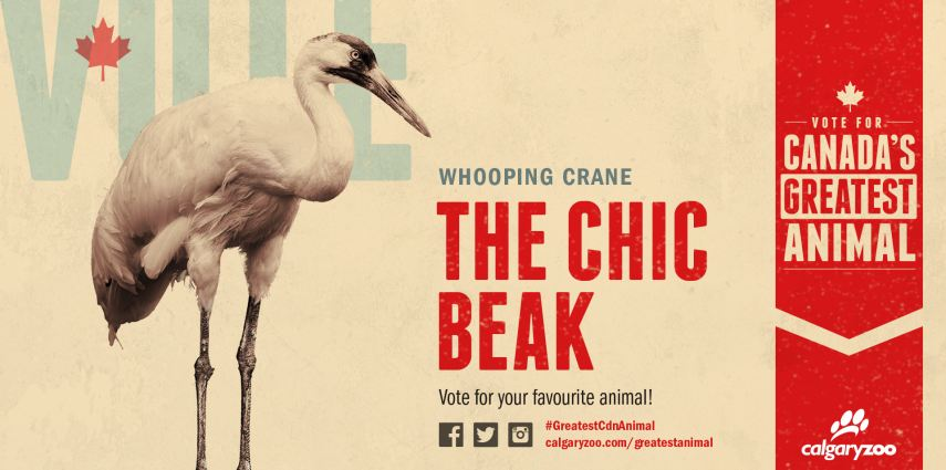 Are you voting for the chic beak?