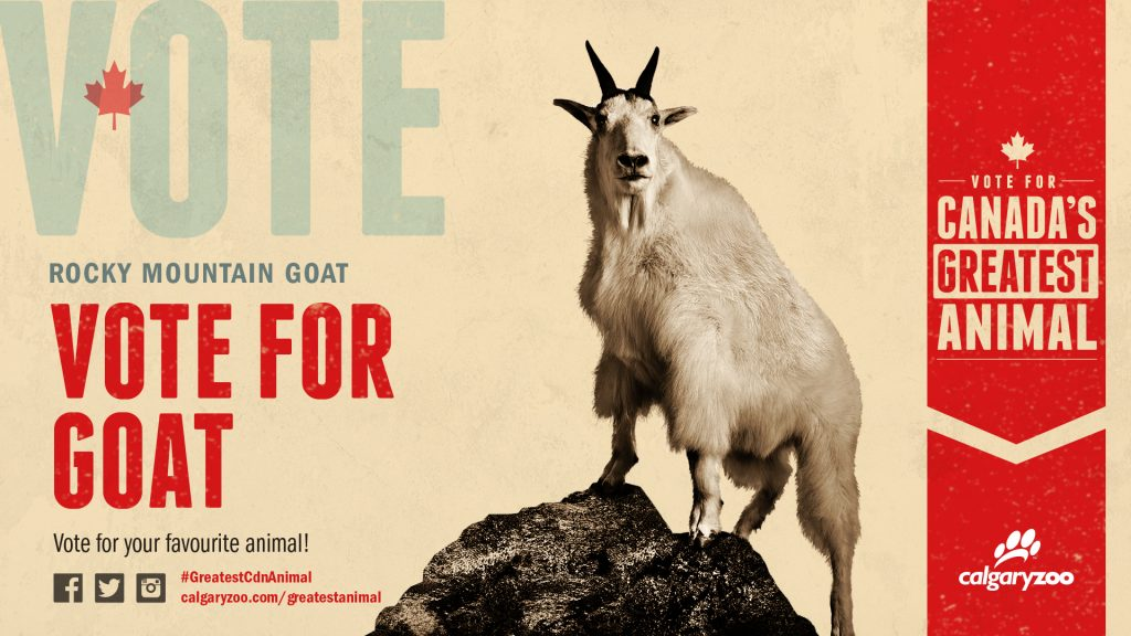 Is it time to vote for goat?