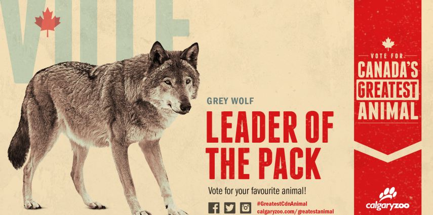 Are you voting for the leader of the pack?