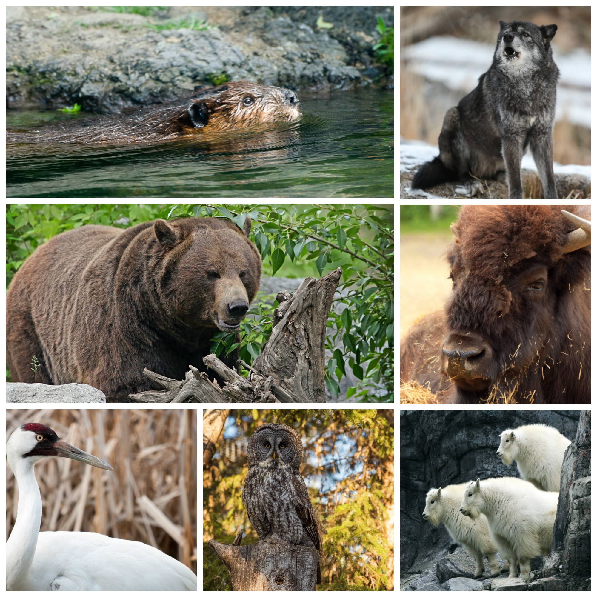 how to preserve endanger animals How to protect endangered animal you can donate money or volunteer your time helping the nature reserve preserve endangered animals are any species of.