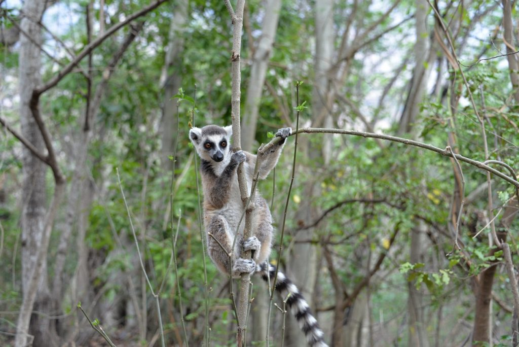 Leapin' lemurs! Make sure to keep any eye out for lemurs in the trees around you.