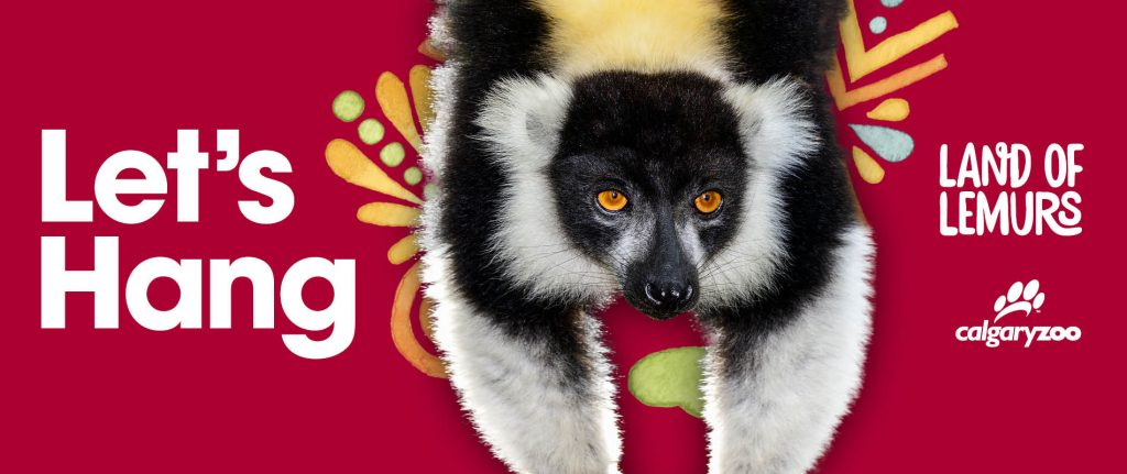 Land of Lemurs opens on July 5, 2017! Your visit is helping us support wild lemurs and communities in Madagascar.