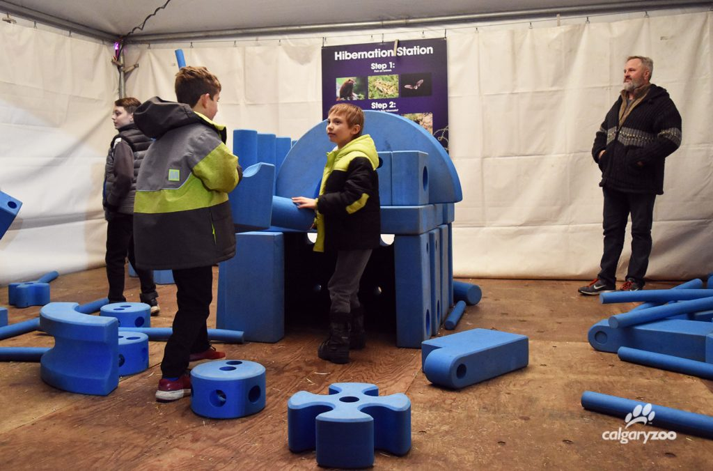 Build your own hibernation station at ZOOLIGHTS!