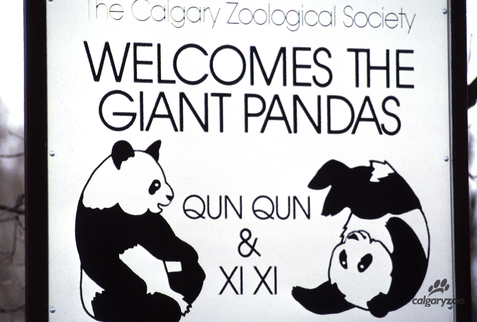Why visit giant pandas at the calgary zoo calgary zoo for years giant pandas have captured the worlds collective imagination with their distinctive markings friendly faces and unique diet as a global symbol buycottarizona Gallery