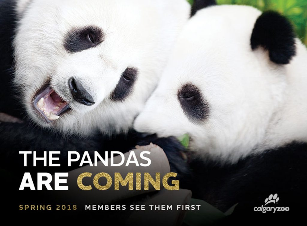 The pandas are coming! Members get to see them first.