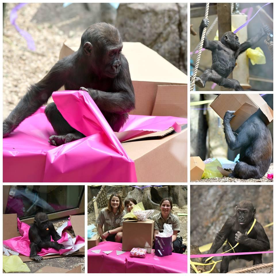 Happy 2nd Birthday Kimani Calgary Zoo Blog