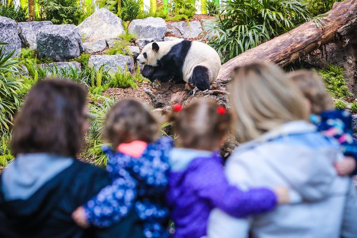 Conservation Conversation Archives - Calgary Zoo - Blog