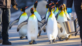 Penguin Walk