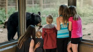 Family Viewing Bears
