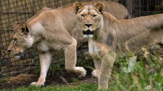 The Calgary Zoo   Calgary's Top Tourist Attraction