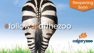 Follow Us Back To The Zoo