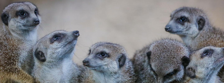 Calgary Zoo Membership   Get Yours Today
