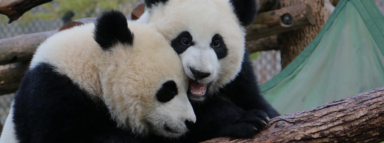 calgary zoo membership renewal and upgrades
