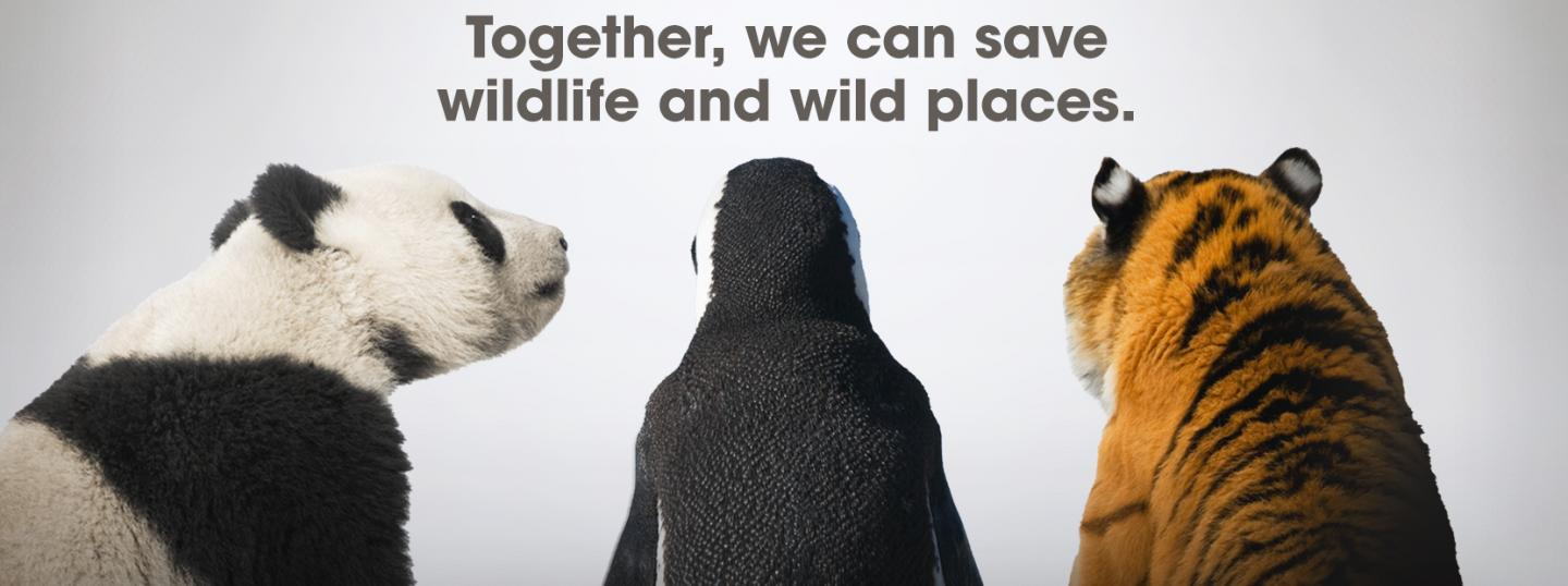 Together, we can save wildlife and wild places.