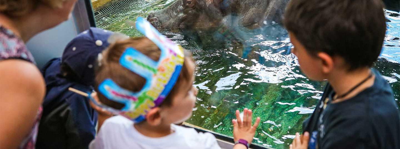Calgary Zoo Birthday Parties Calgary Zoo